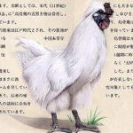 烏骨鶏スーパーリアルイラスト